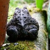 Żaba w lecie Fotografia Stock