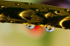 Żaba w raindrop Zdjęcie Stock