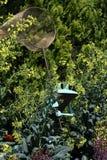 Żaba z motyl siecią Zdjęcia Royalty Free