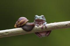 Żaba, zwierzęta, ślimaczek, Fotografia Royalty Free