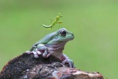 Żaba, zwierzęta, ślimaczek, modliszki, obraz stock