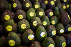 Abacate do fruto foto de stock