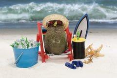 Abacate na praia fotos de stock