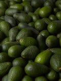 Abacates Fotografia de Stock