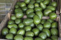 Abacates para a venda Fotografia de Stock