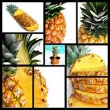 Abacaxi Fotos de Stock