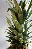 Abacaxi 2 Fotografia de Stock