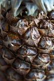 Abacaxi do Close-up, ananás Fotografia de Stock Royalty Free