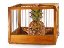 Abacaxi, prisioneiro na gaiola. Imagens de Stock
