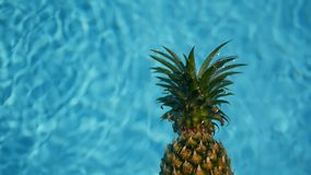 Abacaxi que flutua na água azul na piscina Alimento biológico cru saudável Fruta suculenta Fundo tropical exótico video estoque