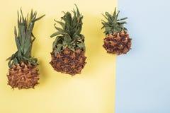 Abacaxi secado no fundo da cor Fotos de Stock