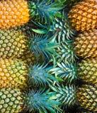 Abacaxis. Imagem de Stock