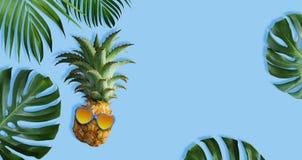 Abacaxis com óculos de sol e as folhas tropicais Imagens de Stock