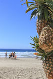 Abacaxis na praia Fotografia de Stock Royalty Free