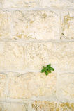 Abadía de Dormition en Jerusalén Pared Foto de archivo