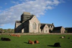Abadía de Iona con ganado Foto de archivo libre de regalías