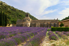 Abadía de Senanque con el campo de la lavanda Imagen de archivo libre de regalías