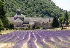 Abadía o Abbaye Notre-Dame de Senanque de Senanque con el campo de la lavanda en la floración, Gordes, Provence, Fotos de archivo