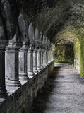 Abadia de Sligo, Sligo, a República da Irlanda Foto de Stock Royalty Free