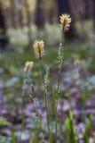 Abaissement de l'herbe dans les bois Photographie stock libre de droits