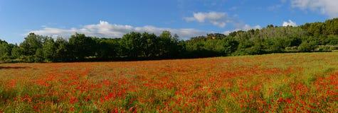 Abaissement du champ de pavot en Provence Photo libre de droits