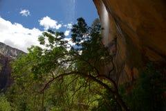 Abaissez Emerald Pool Trail J Image libre de droits
