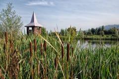 Abaissez la réserve naturelle de Bruckland Photo libre de droits