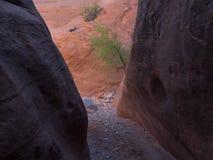 Abaissez le canyon de Maidenwater Image libre de droits
