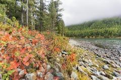 Abaissez le lac Multinskoe, montagnes d'Altai Russie Autumn Landscape Photographie stock libre de droits