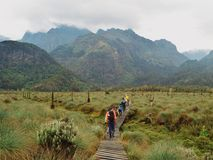 Abaissez le marais de bigo, parc national de montagnes de Rwenzori Photo libre de droits