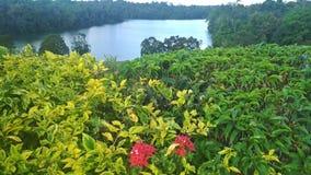 Abaissez le réservoir de Peirce, Singapour Photographie stock libre de droits