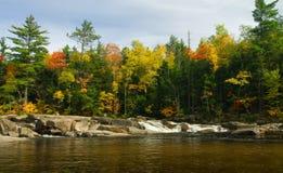 Abaissez les automnes Photos libres de droits