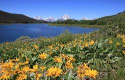 Abaissez les automnes, parc national de Yellowstone Image libre de droits
