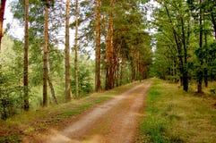 Abaissez les forêts de la Silésie Photo stock