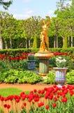 Abaissez les jardins du palais de Petergof dans le St Petersbourg Images libres de droits