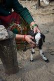 Abaissez Pissang, Népal - 15 mars 2016 : Dame âgée prenant soin de Photographie stock libre de droits