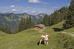 Abaissez Wildfeldalm Photo stock