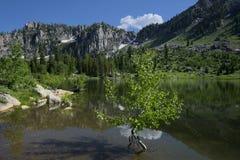 Abaixe o lago bloomington Fotos de Stock Royalty Free