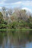 Abaixe o parque estadual do rio de Wekiva, Florida, EUA Imagens de Stock Royalty Free