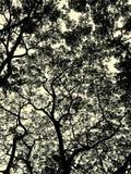 Abaixo da máscara da árvore Imagens de Stock Royalty Free