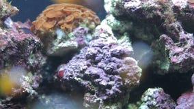 Abaixo do recife da água video estoque