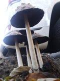 Abaixo dos cogumelos venenosos imagens de stock royalty free