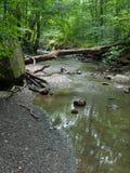 Abajo árbol sobre un río Imágenes de archivo libres de regalías