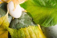 Abajo caidas hojas amarillas y verdes de un tilo Imagenes de archivo