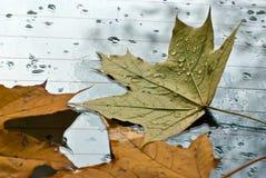 Abajo caidas las hojas de otoño Imagenes de archivo