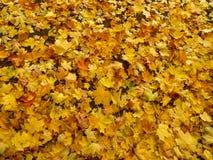 Abajo caidas las hojas de otoño Imágenes de archivo libres de regalías