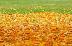 Abajo caidas las hojas del amarillo Imágenes de archivo libres de regalías