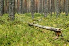 Abajo caido árbol putrefacto Imagen de archivo libre de regalías