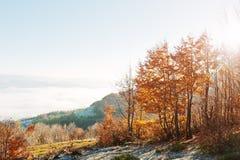 Abajo camino en bosque del otoño en la colina de la montaña Fotos de archivo libres de regalías