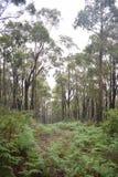 Abajo colina brillante Forest Path Imagen de archivo libre de regalías